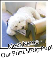 Nemo - Our Print Shop Pup